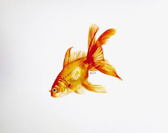 Goldfish colored pencil drawing ORIGINAL