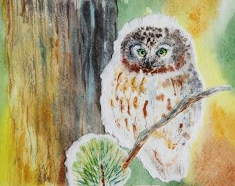 OWL Watercolor Bird Owl Art Watercolor Painting Original Watercolor
