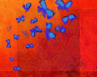 Blue morphos butterflies, red background