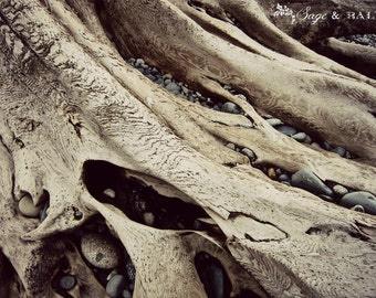Driftwood photography print, seaside, beachy, rustic, cottage-chic, nature photography, travel photography, abstract, British Columbia
