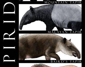 Tapirs of the World
