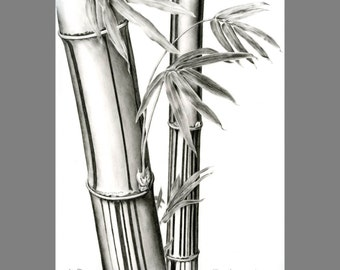 drawing ~ botanical illustration print ~ Digital download print of a carbon dust bamboo drawing