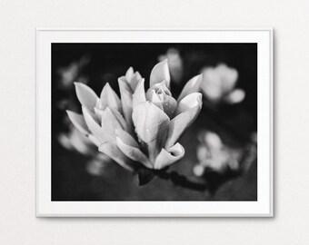 Magnolia Print, Magnolia Flower, Magnolia Wall Art, Home Decor, Floral Photography, Floral Bedroom Decor