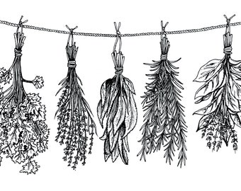 Herbs - Fine Art Digital Giclee Print