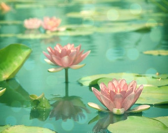 Floral, Nature Photography Pink Flowers Lotus Picture Pink Aqua Teal Blue Waterlillies - Floral 8x8 inch Print - Dancing in Stillness