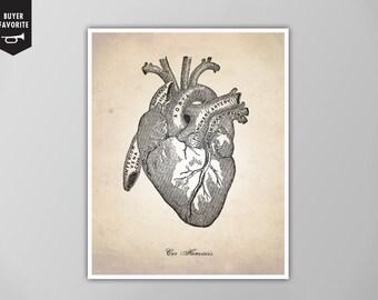 Human Heart, Human Anatomy Heart Art Print, Human Anatomy Drawing, Human Anatomy Poster, Human Heart Illustration, Heart Poster, Heart Print