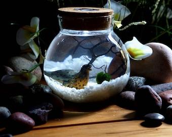 Miniature Marimo Moss Ball Orb Terrariums Aquarium Seal