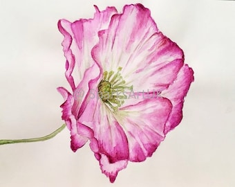 Pink poppy - print of original watercolour painting