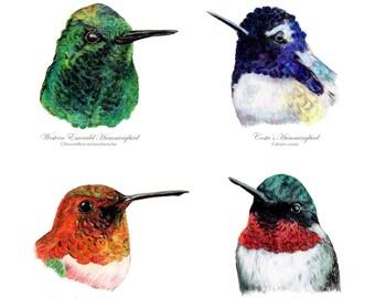 Four Hummingbirds