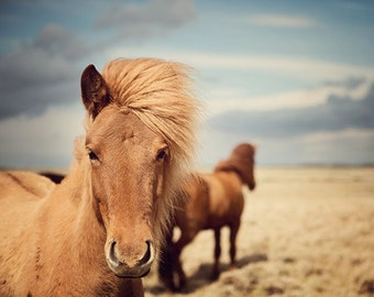 "Horse Art, Nature Photography, Icelandic Horse Print, Horse Decor, Photography Print, Nature Print, Horse Photography ""Outlaws"""