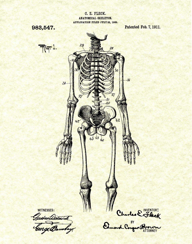 Orthopedic Skeleton Patent 1911 Anatomical...
