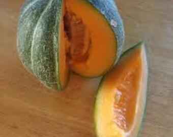 """Melon / Cantaloupe Seeds - """"Noir De Carmes Muskmelon' -  Heirloom Seeds"""