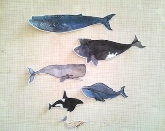 Whale Sticker Set, unique, hand cut, Art Stickers