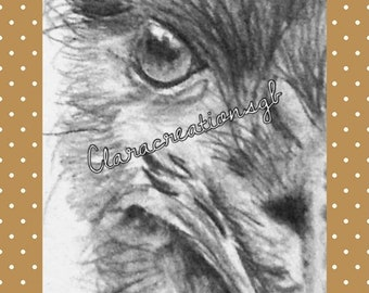 ACEO Emu art trading card by Suffolk artist. Print of original pencil drawing.Wildlife collectable, wildlife lover,