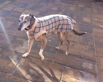 Greyhound jumpers
