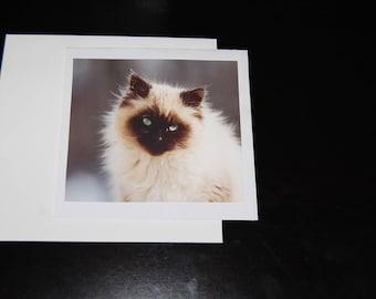 Chocolate Point Balinese Kitten Photo 5x5 Notecard with Envelope