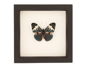 Framed Butterfly Cracker Butterfly