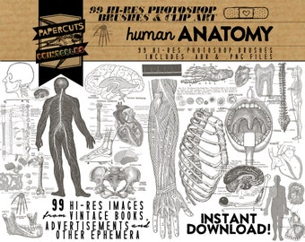 Human Anatomy - 99 Hi-Res Photoshop Brushes / Clip Art / Image Pack - Includes .ABR and .PNG Files