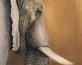 Color Pencil Elephant