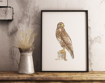 Buzzard, buzzard painting, buzzard art print, stunning print of a Buzzard Bird of Prey, A4, based on original watercolor painting.
