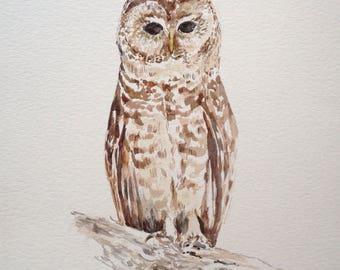 SALE -Spotted Owl - Original Art - Owl Art - Animal Art - Wildlife Art