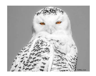 "16"" x 20"" Snowy Owl Canvas Signed by Artist"