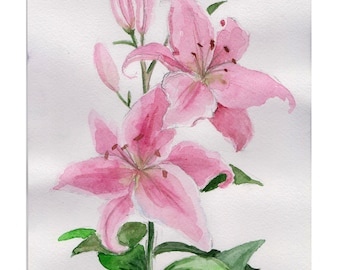 Watercolor drawing Lilies