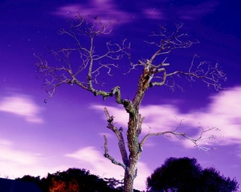 Photo of SURREAL NIGHT SCENE with Stars and a Dead Tree - Time Exposure