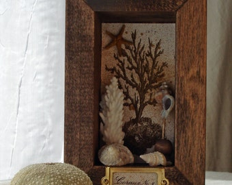 Coral Curiosity Specimen No. 4