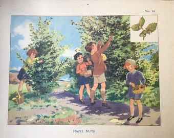 Vintage Wall Chart, School Poster, Educational, Autumn, Fall, HAZEL NUTS, Children
