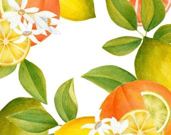 Watercolor citrus clipart, Lemons clipart, Orange clipart, Citrus illustration, fruits clipart, Tropical Clipart, Watercolor clipart