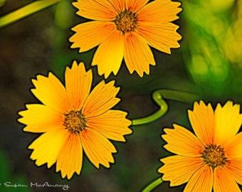 Fleur de photographie, photographie de la Nature, Nature Wall Art, Wildflower Art, fleur Art Print, illustration de fleur, jaune, Orange, fleurs sauvages d'impression