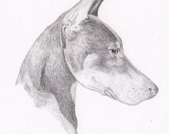 Doberman Pinscher Note Cards - Gift Set of Eight - Free Shipping US - Original Pencil Art Design - Desert Impressions