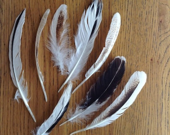 Lot 10 - 8 Pcs Black and White Wing Feathers, Natural Bird Feathers For Craft, Millinery Supplies
