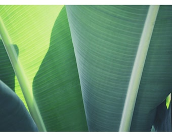 Home Decor - Green Art - Green Print -  Fine Art Photograph - Floral Art - Banana Leaf - Plantain 1- Botanical Art - Oversized Wall Art