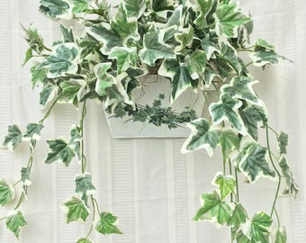 Ivy Wall Decoration, Ivy Plant, Ivy Wall Hanging, Ivy Wall Hanger, Ivy Decor, Home Decor, Ivy Home Decor, Wall Decor, Artificial Wall Decor