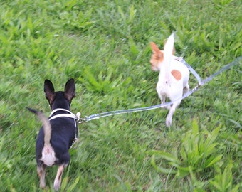 Invisible transparent SDOPPIO for two dogs Accoppiacani-Double leash collar for two dogs