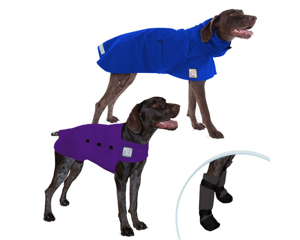 German shorthaired pointer moderate climate special dog rain zoom geenschuldenfo Gallery