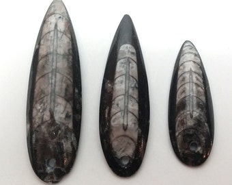 Orthoceras Pendants
