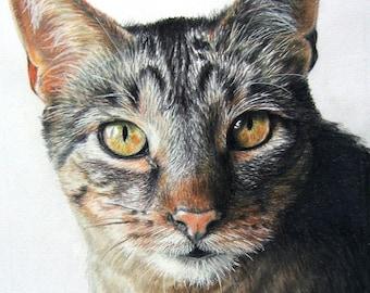 Hand-Drawn Custom Pet Portrait 11 x 14 Colored Pencil Art by Carla Kurt cat dog horse memorial