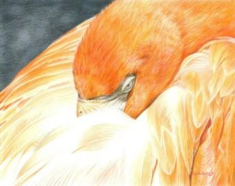 Bird Art SLEEPING FLAMINGO print by Carla Kurt Signed 11 x 14 wwao ebsq