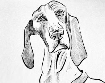 Hound Dog Can See