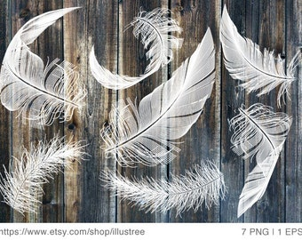 White feather digital clip art set, photo overlay, illustration, drawing, art print, home decor, pillow, vector, EPS, PNG, instant download