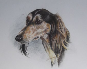 Original Drawing - Saluki