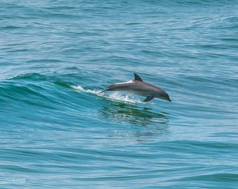 Dolphin in the Surf - Emerald Isle, NC
