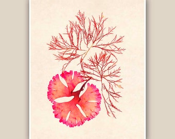 Seaweed Artwork Print,  Seaweed art Print, Print Pressed seaweed Art, in red, beach cottage decor, Wall Decor, Sea Grass Ocean, Nautical art