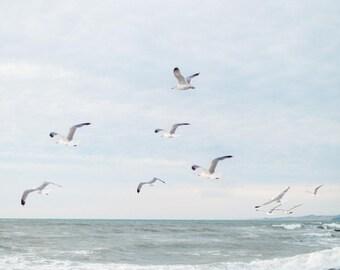 Moonstone Beach Birds