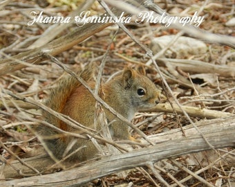 Squirrel Fine Art Photography