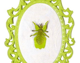 Leaf Bug Mounted in Lime Green Victorian Frame - Wall Art Decor 6x8in