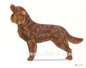 American Water Spaniel Dog - Archival Fine Art Print - AKC Best in Show Champion - Breed Standard - Sporting Group - Original Art Print